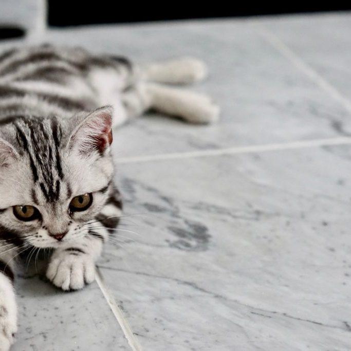 donate_kitty